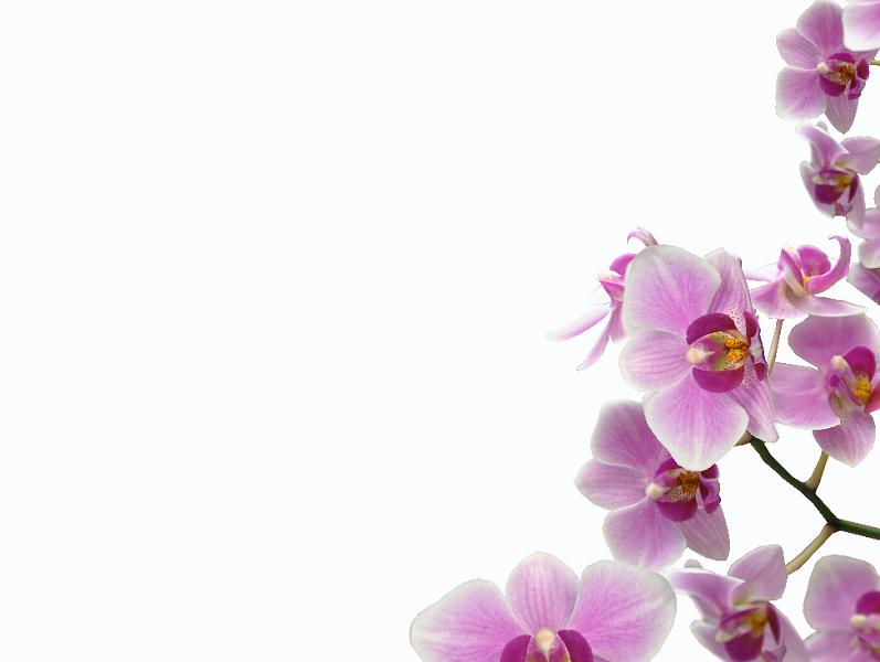Nikon Playtime Orchid Frame